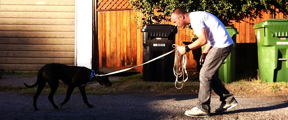 dog trainer Sean O'Shea