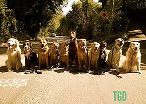 Los Angeles Dog Trainer