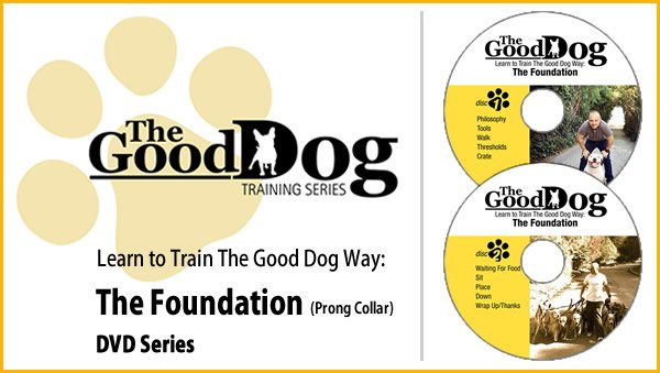 learn to the train the good dog way the foundation the good dog way